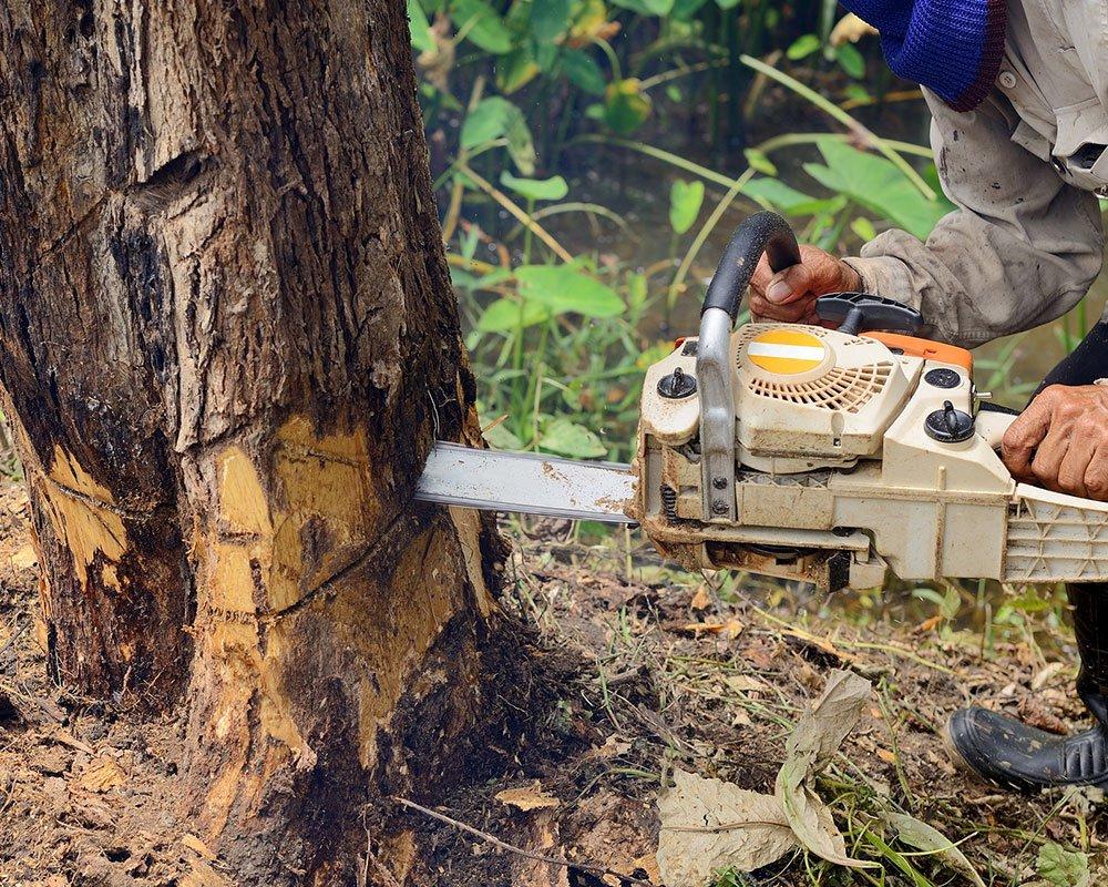 Tree Service Universal City - Tree Removal