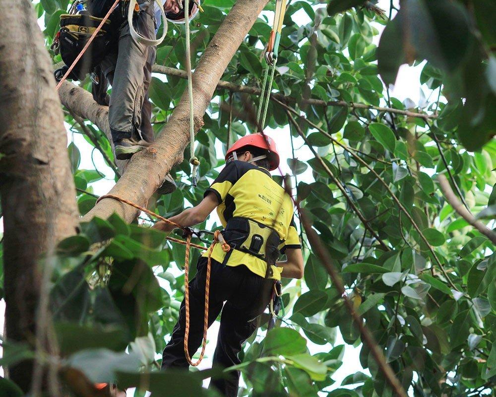 Tree Service Universal City - Emergency Tree Removal