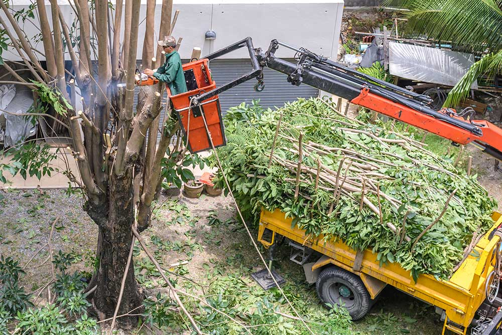 Tree Service Universal City - Tree Pruning